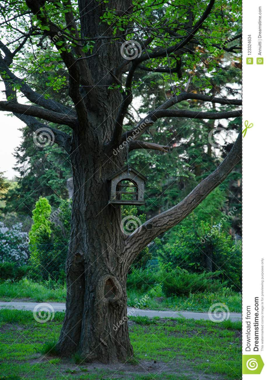 trunk of large tree