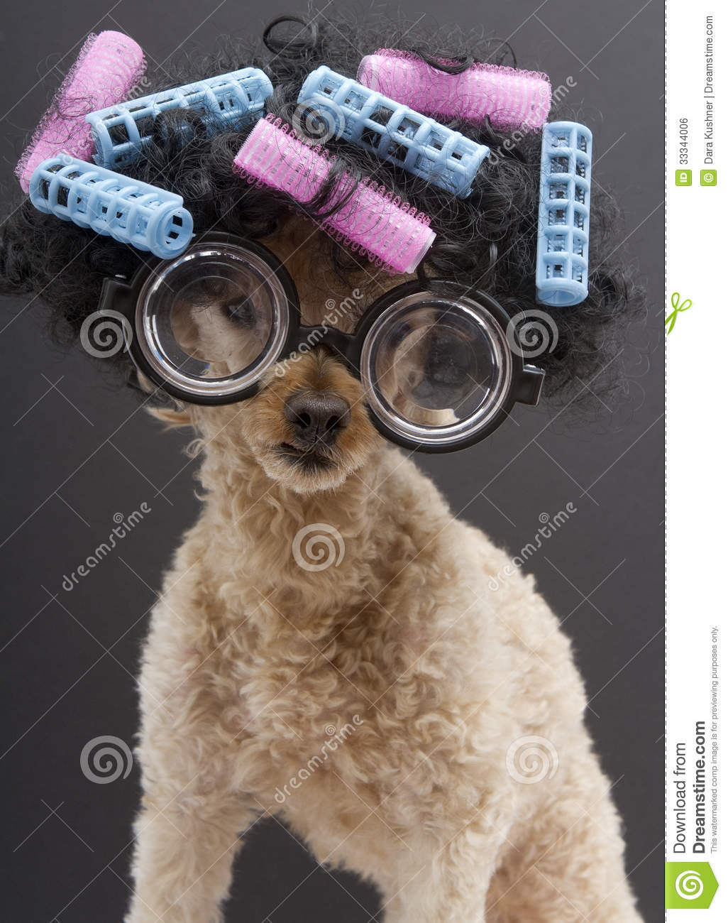 Big Glasses Hair And Curlers Royalty Free Stock Image
