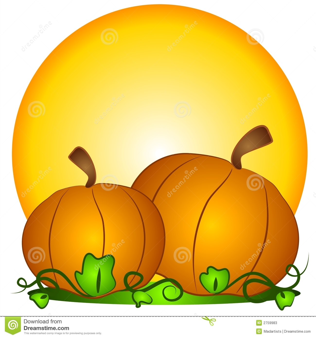 hight resolution of a couple of big orange pumpkins in a pumpkin patch with sun in the background a classic symbol for thanksgiving and halloween