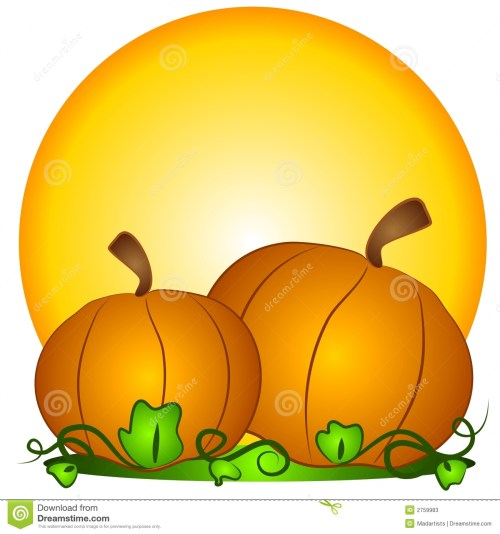 small resolution of a couple of big orange pumpkins in a pumpkin patch with sun in the background a classic symbol for thanksgiving and halloween