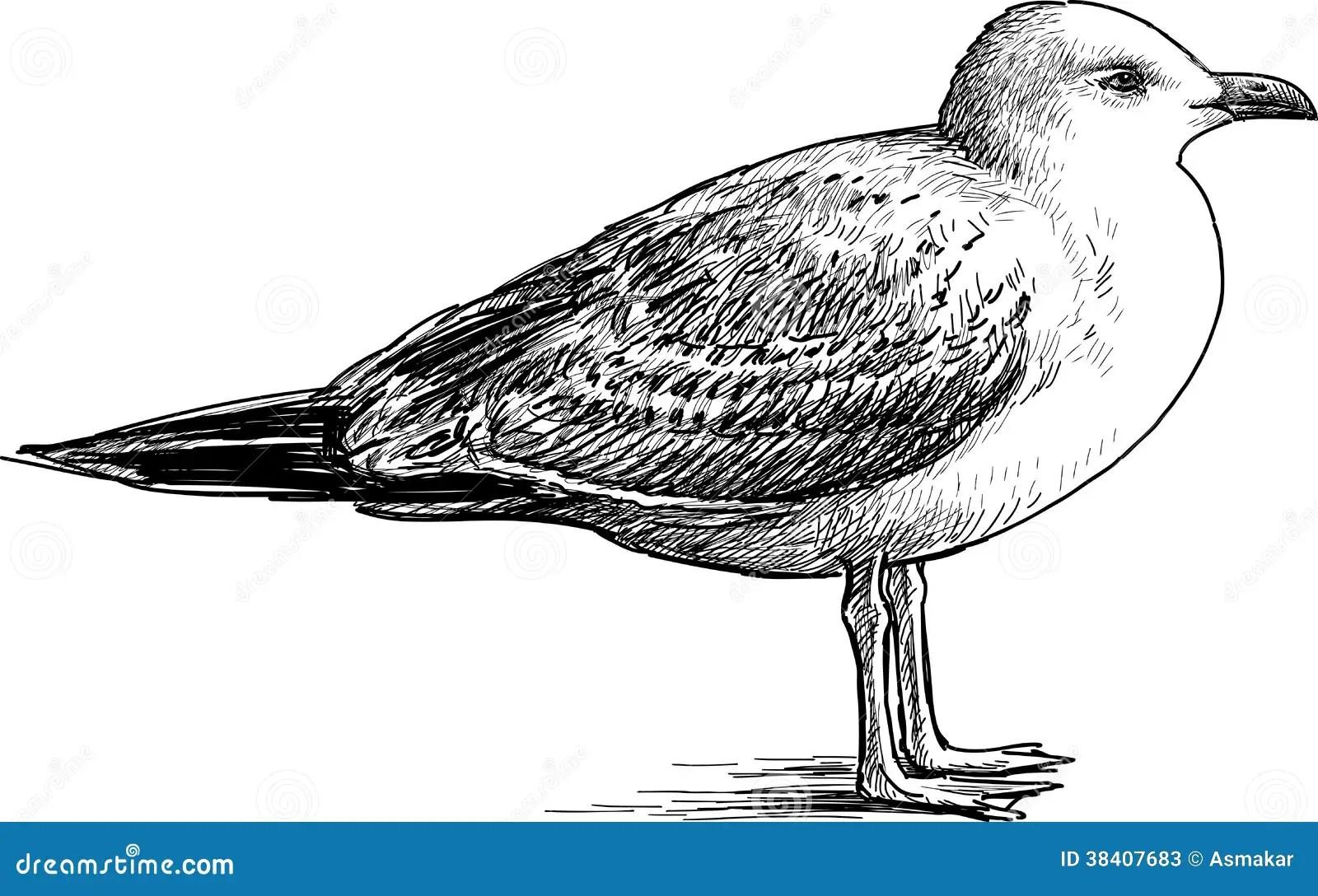 Big Seagull Stock Photos
