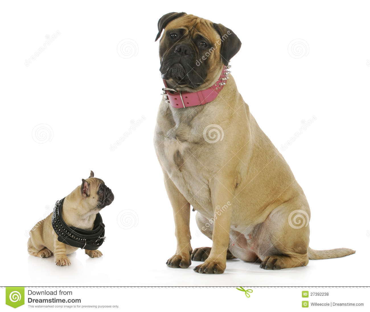 Big And Small Dog Stock Photo Image Of Large Gesture
