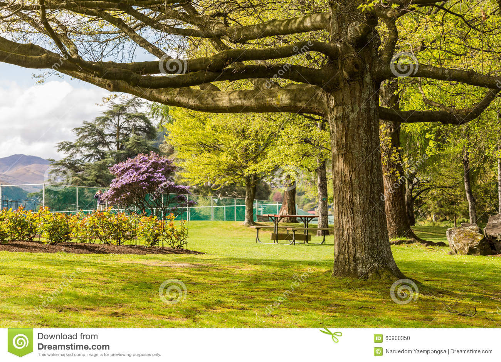 Big Tree In Garden Stock Photo Image Of Tree Bench