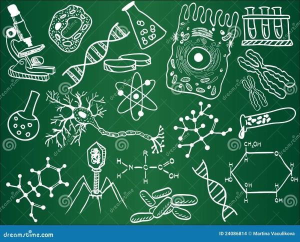 Biology Sketches School Board Stock