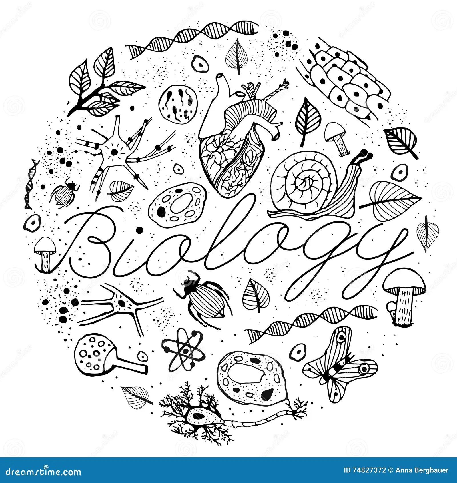 Biology Vector Doodles Stock Vector Illustration Of