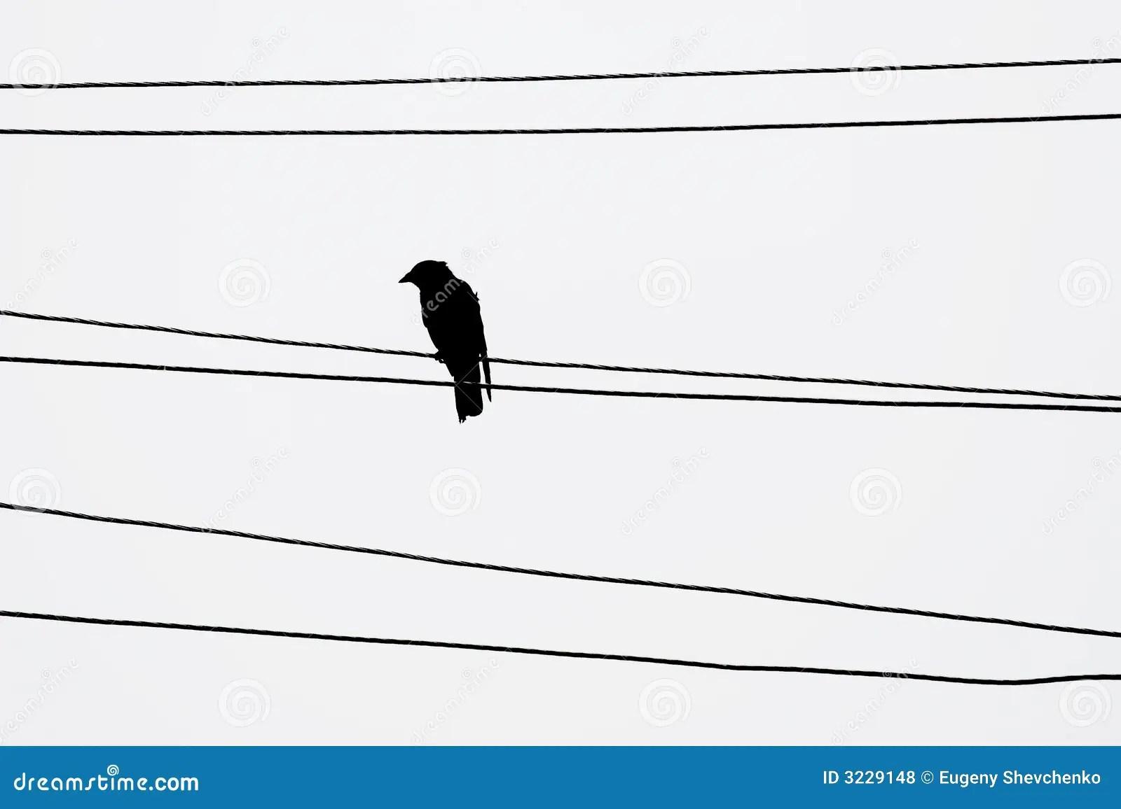Bird stock photo. Image of wire, lead, telephone