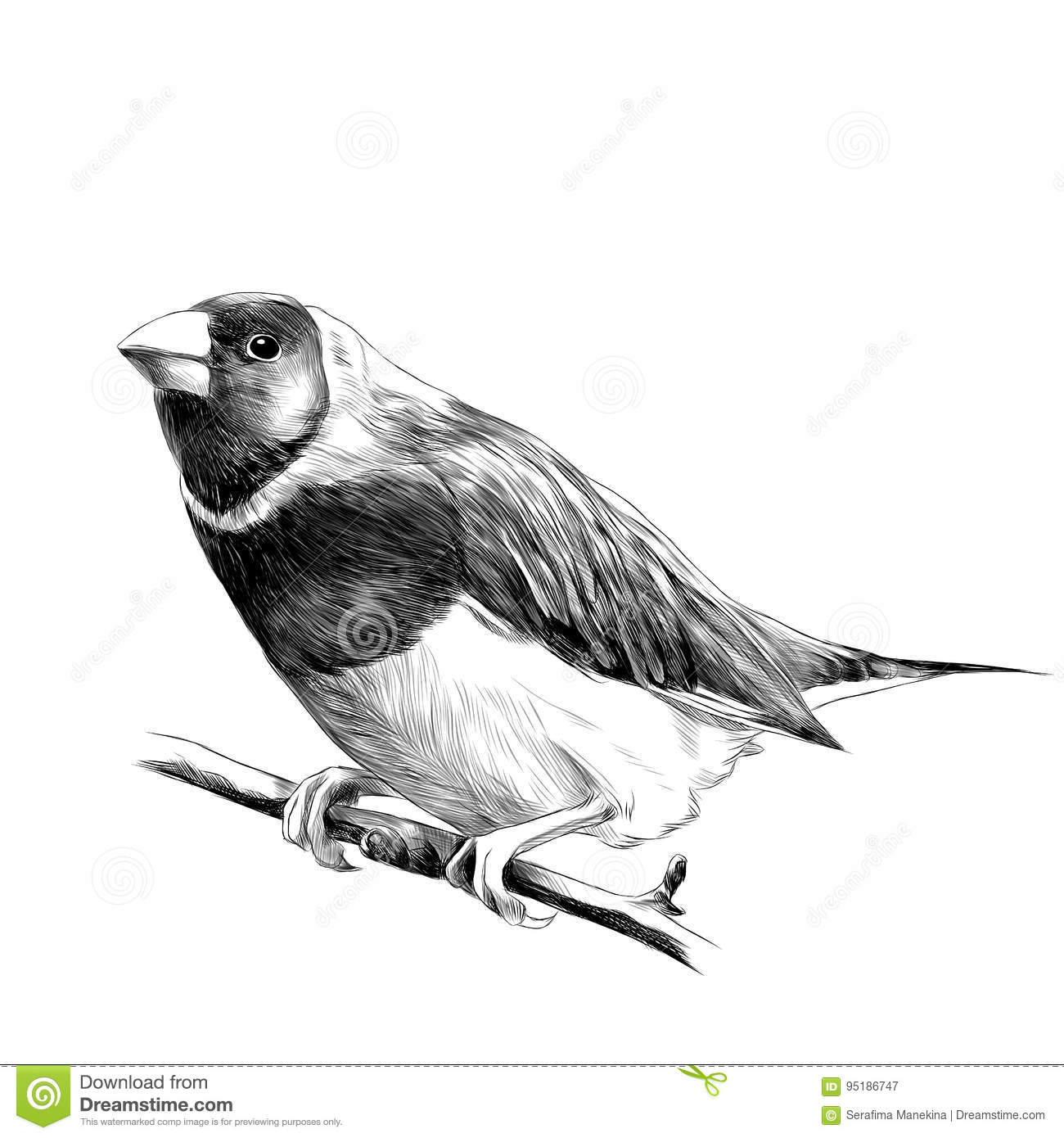 Parrot Ink Sketch Stock Photography