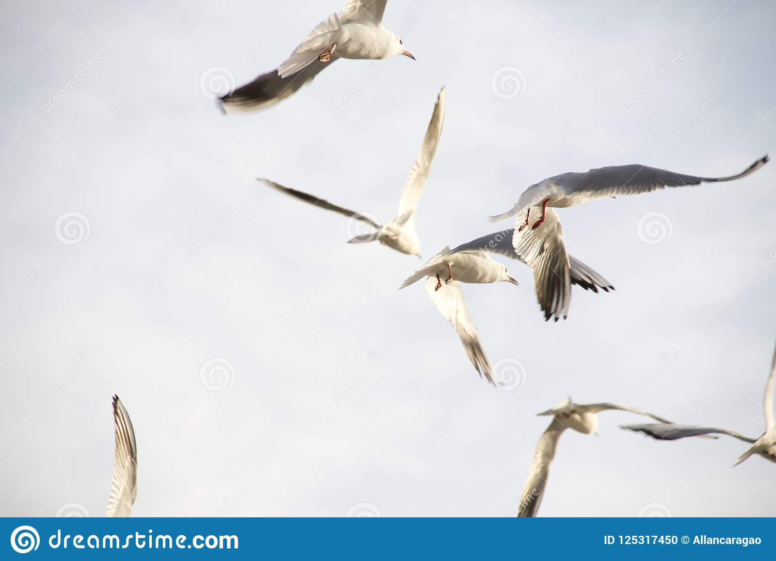 bird flying with free