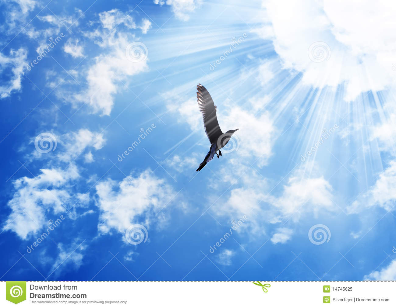 Bird Flying To The Sun Royalty Free Stock Photo  Image
