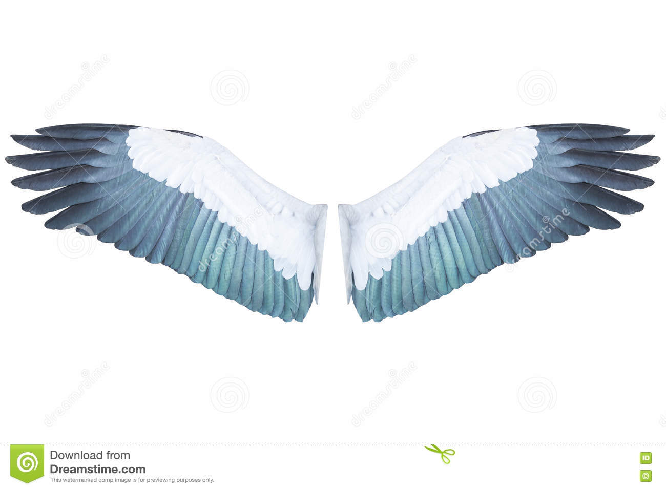 clipping duck wings diagram pioneer deh 1900mp wiring bird isolated on white background stock photo