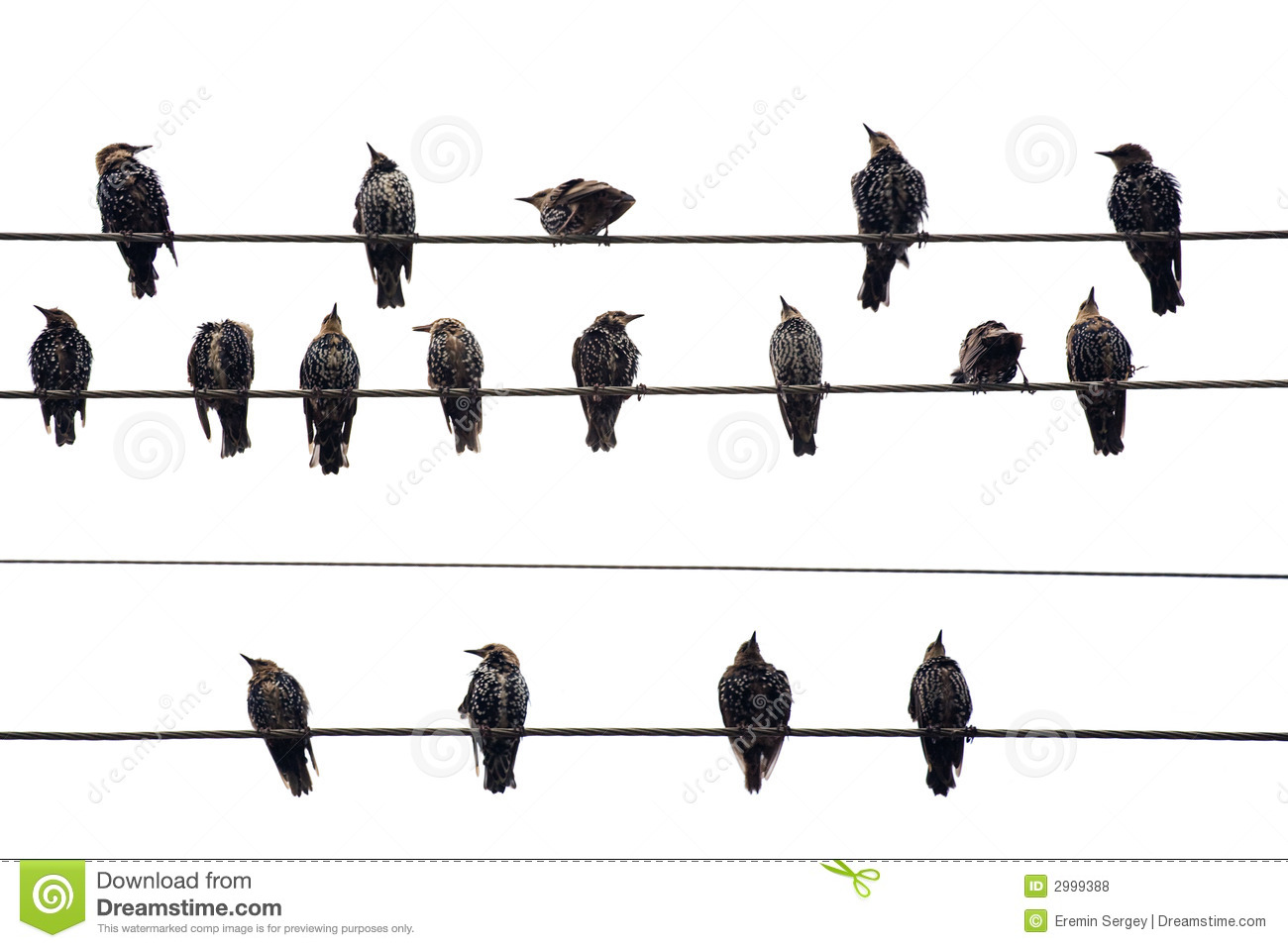 Birds On A Wire Isolated On Royalty Free Stock Photos