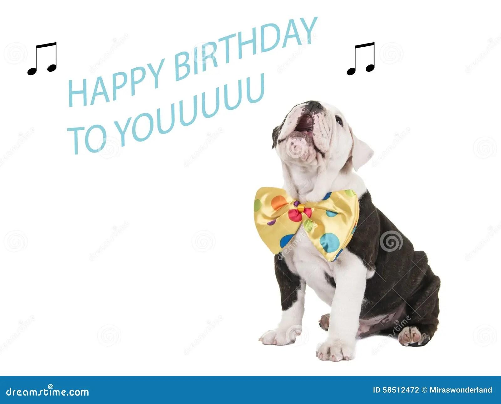 Birthday Card With English Bulldog Singing Stock Photo