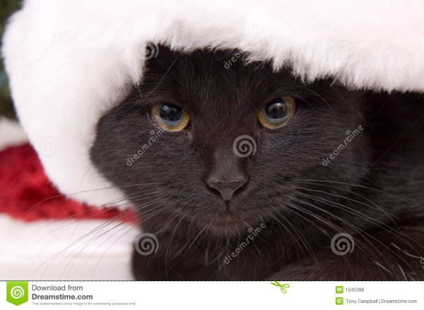 Images of Black Cats with Santa Hats On