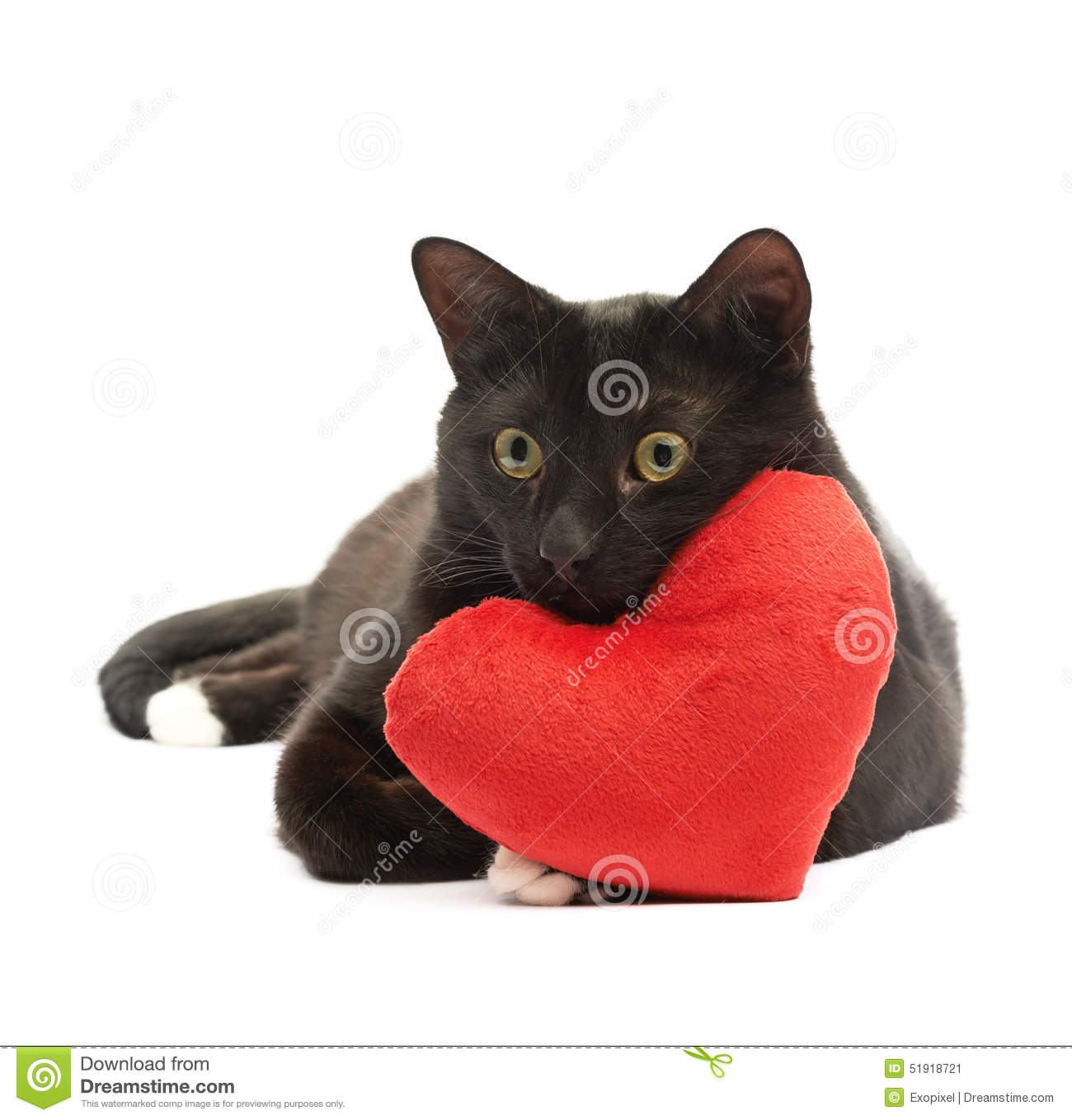 Cat With Heart Vector Illustration