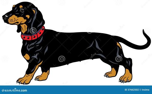 black dachshund stock vector. illustration