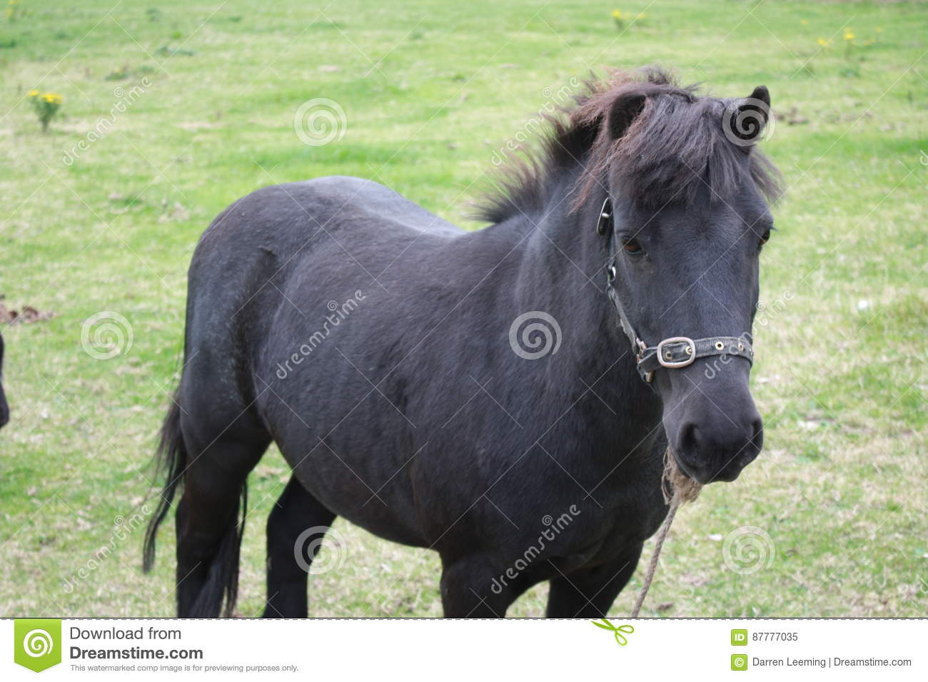 hight resolution of black pony in a farm green grass field