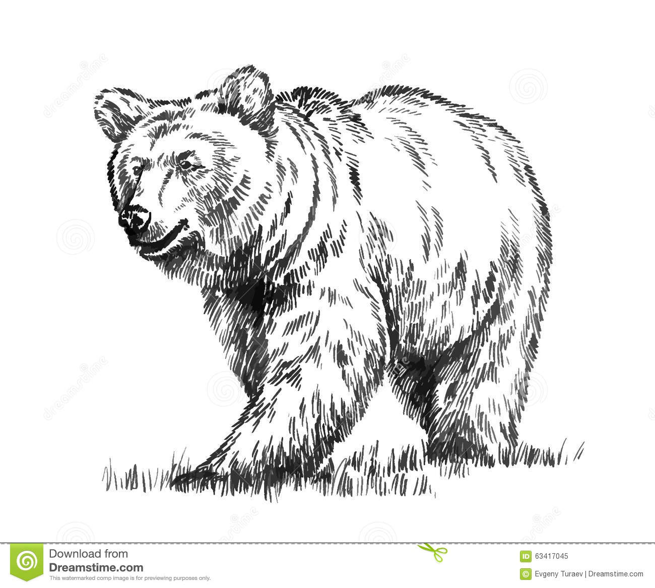Black And White Engrave Isolated Vector Bear Stock Vector