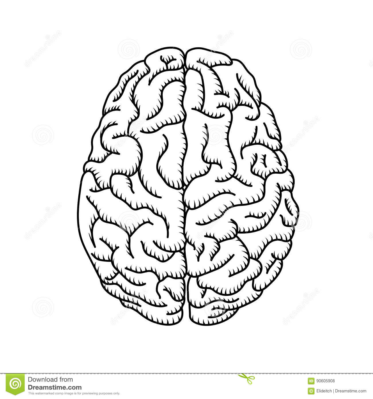 brain function stock photos illustrations and vector art