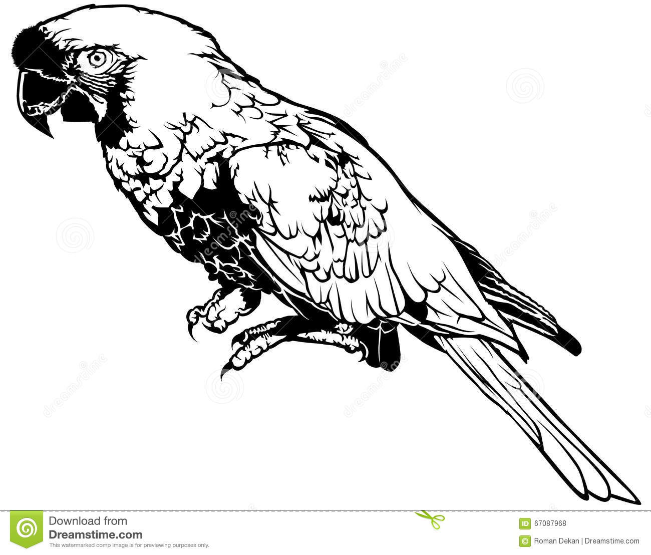 Black And White Parrot Stock Vector Image Of Macaw