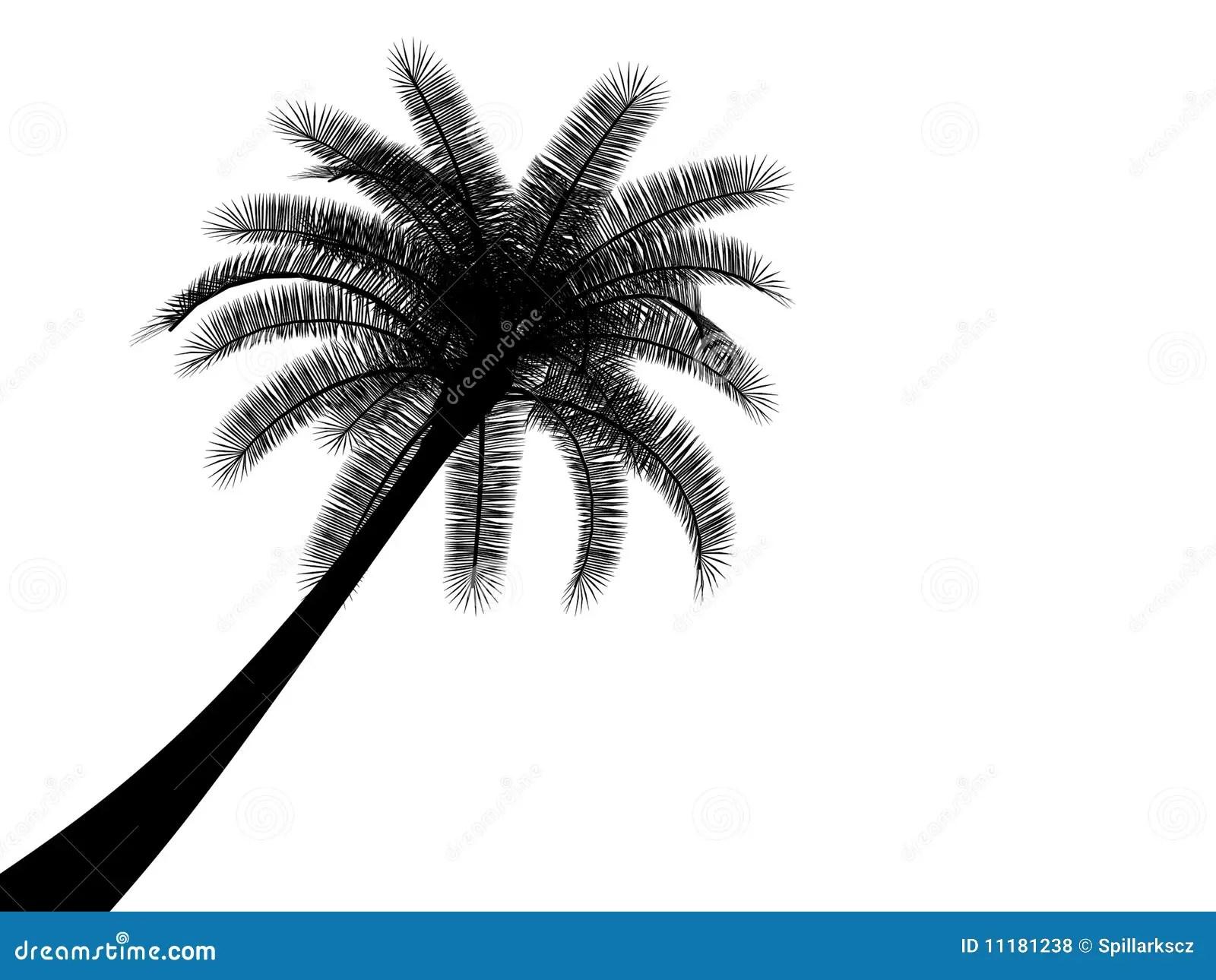 Black And White Tropical Palmtree Palm Tree Royalty Free
