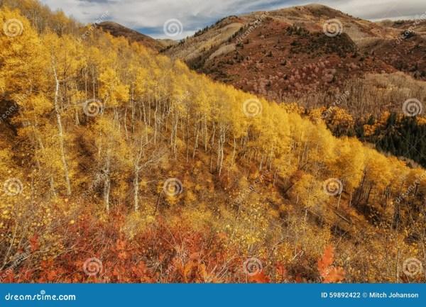Blending Of Autumn Stock - 59892422