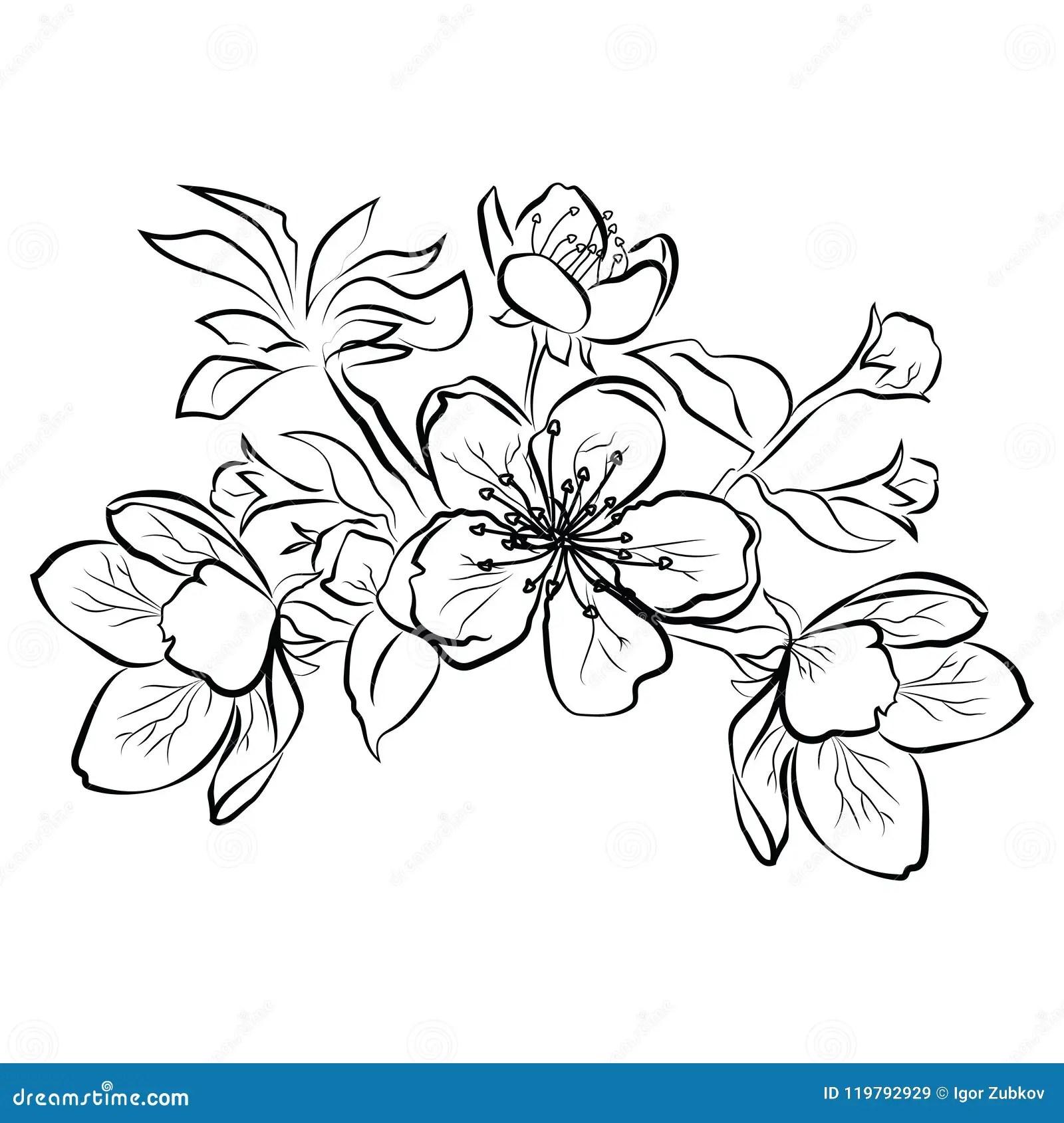 Blomma Cherry Sakura Filial Med Blommaknoppar Svartvit