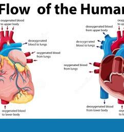 blood flow of the human heart illustration [ 1300 x 745 Pixel ]