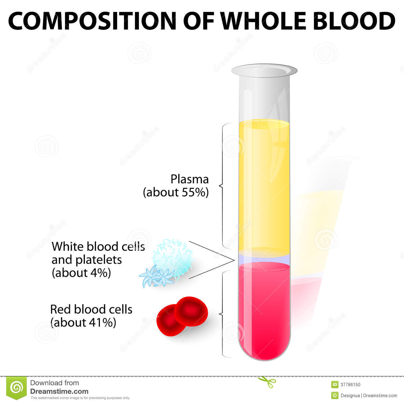 Blood Plasma And Formed Elements In Test Tube Stock Vector