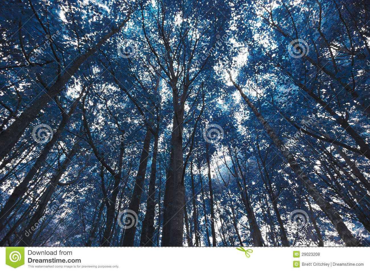 Blue Forest Trees Royalty Free Stock Photos  Image 29023208