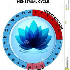 Menstrual Cycle Diagram With Ovulation Telephone Cable Wiring Uk Of Free Engine Image For User