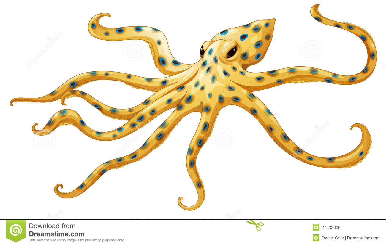 octopus water vascular system diagram 2006 ford escape door wiring blue ringed royalty free stock photo image 27232005