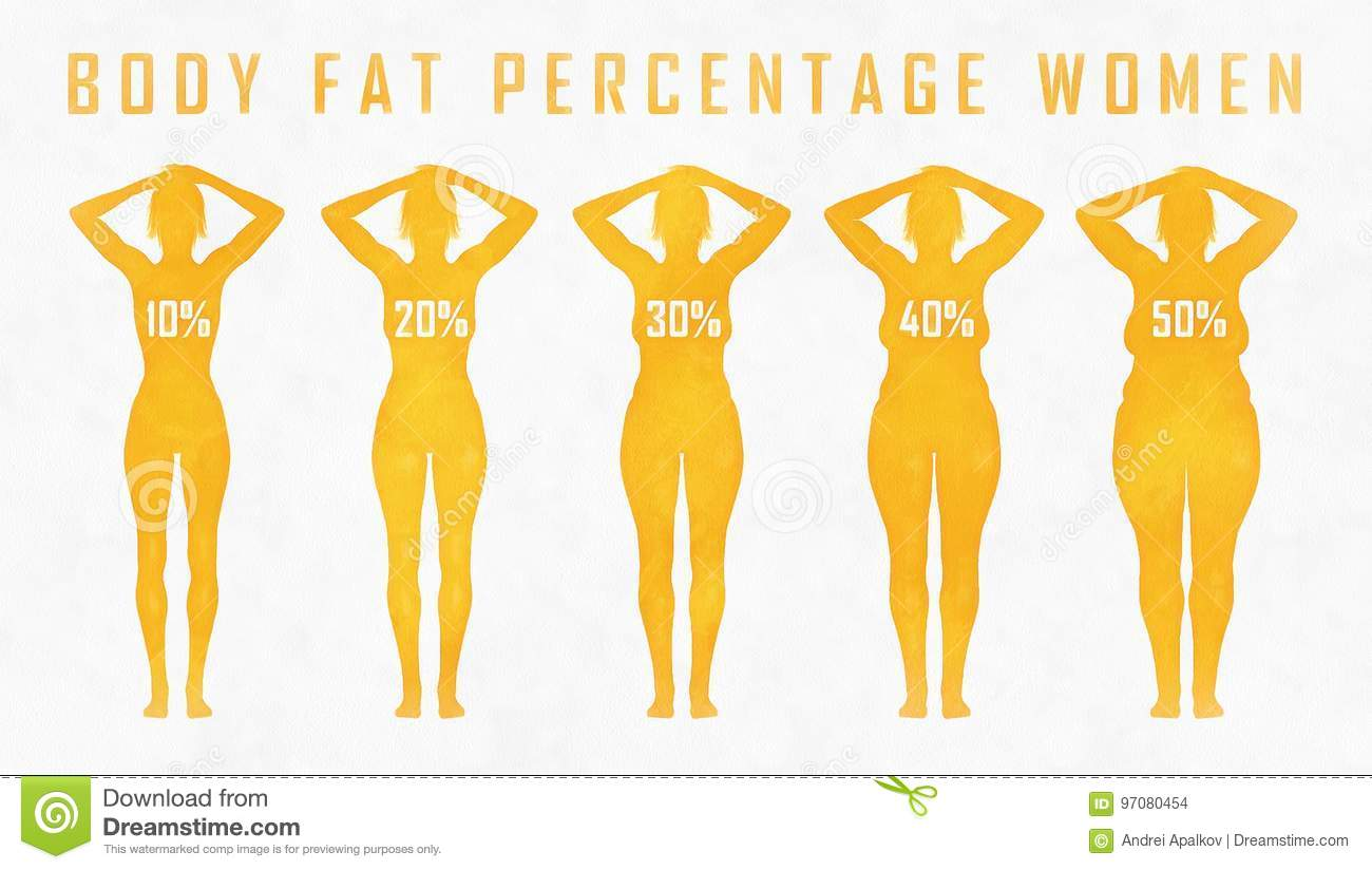 hight resolution of body fat percentage woman