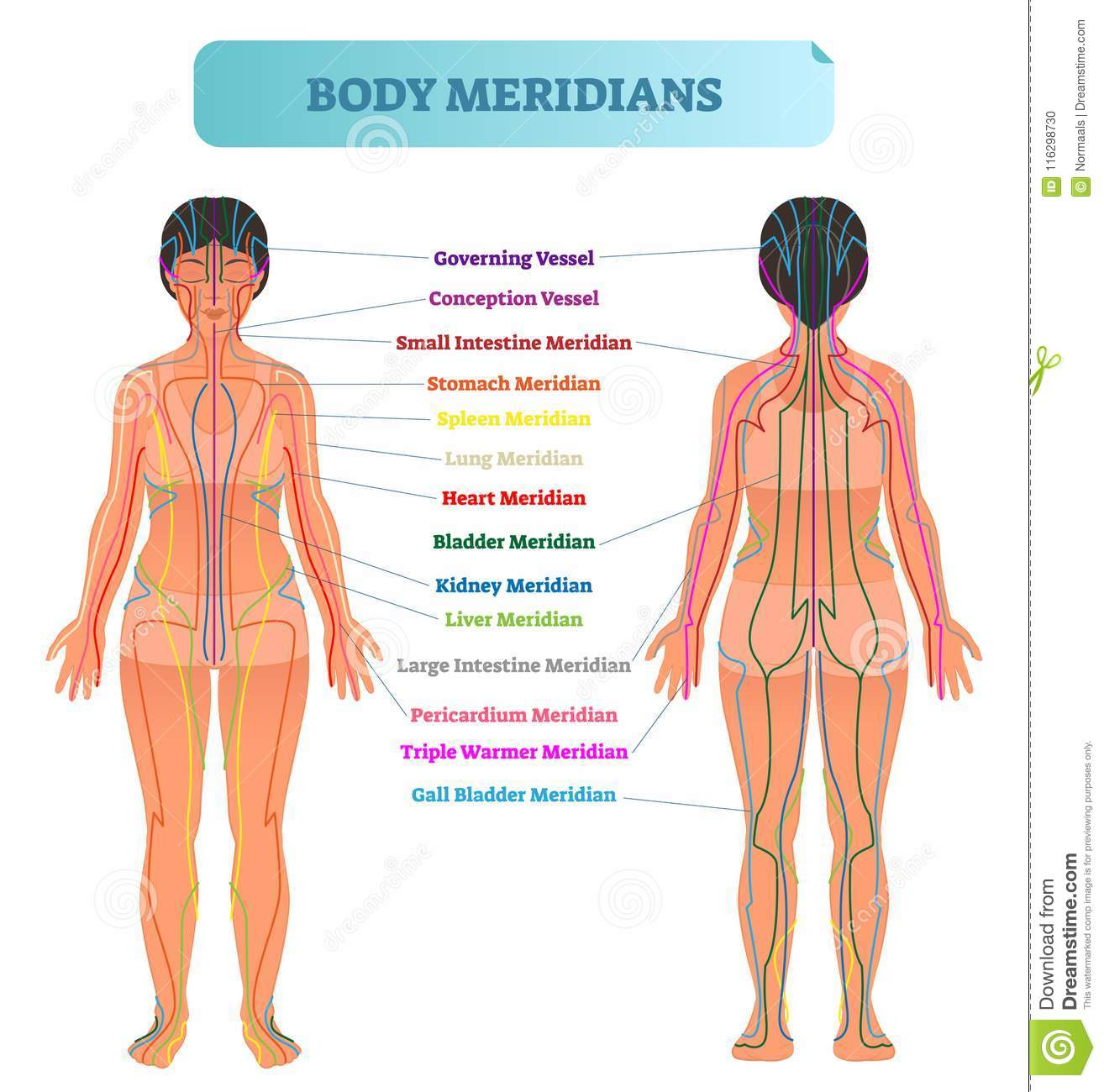 hight resolution of body meridian system vector illustration scheme chinese energy acupuncture therapy diagram chart