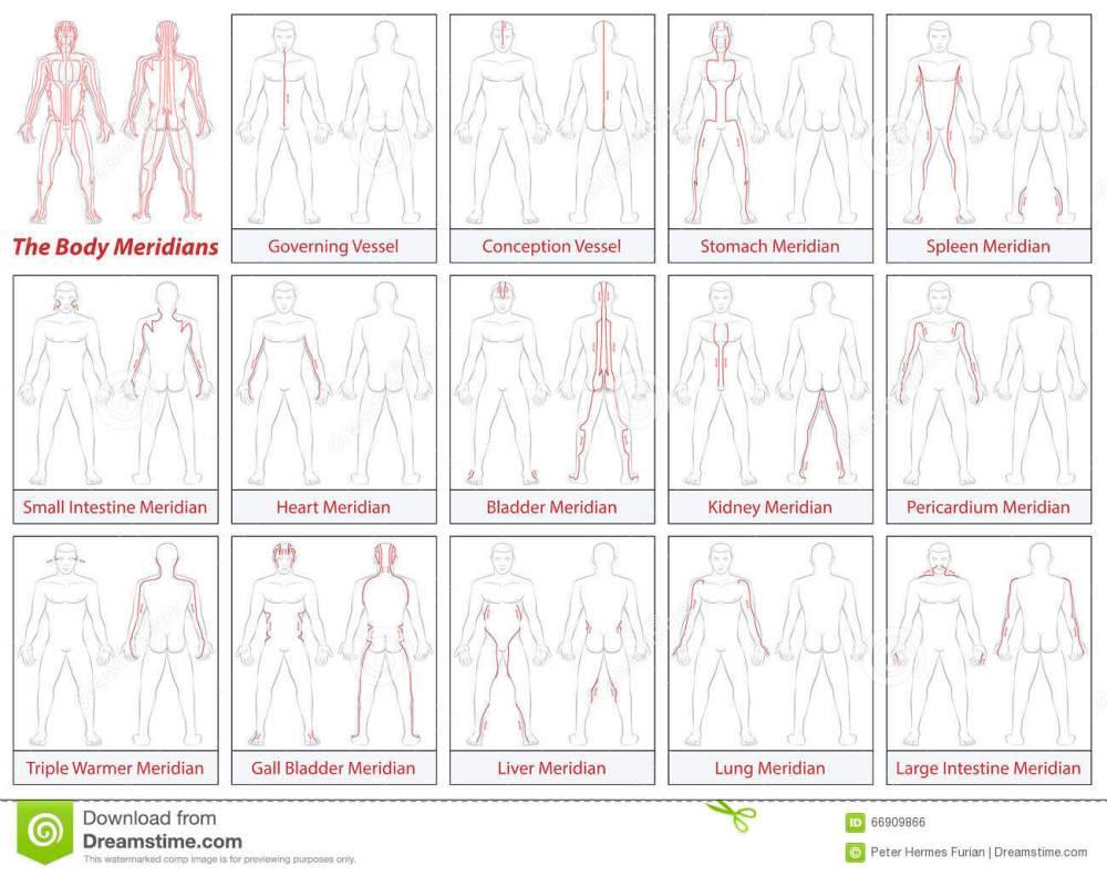 medium resolution of body meridians schematic diagram flow direction
