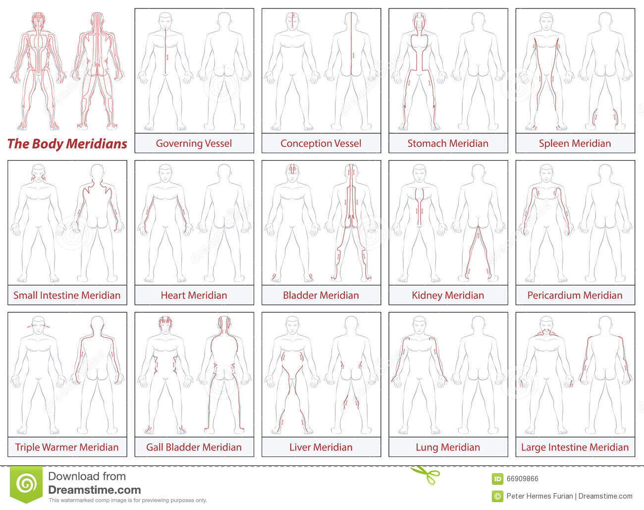 hight resolution of body meridians schematic diagram flow direction