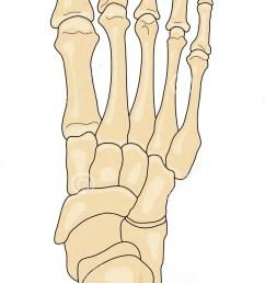 bones of the foot stock vector illustration of cuboid 8606663 foot bone diagram unlabled [ 738 x 1300 Pixel ]