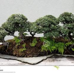 Bonsai On Landscape Stone Flat Gardening Flower And