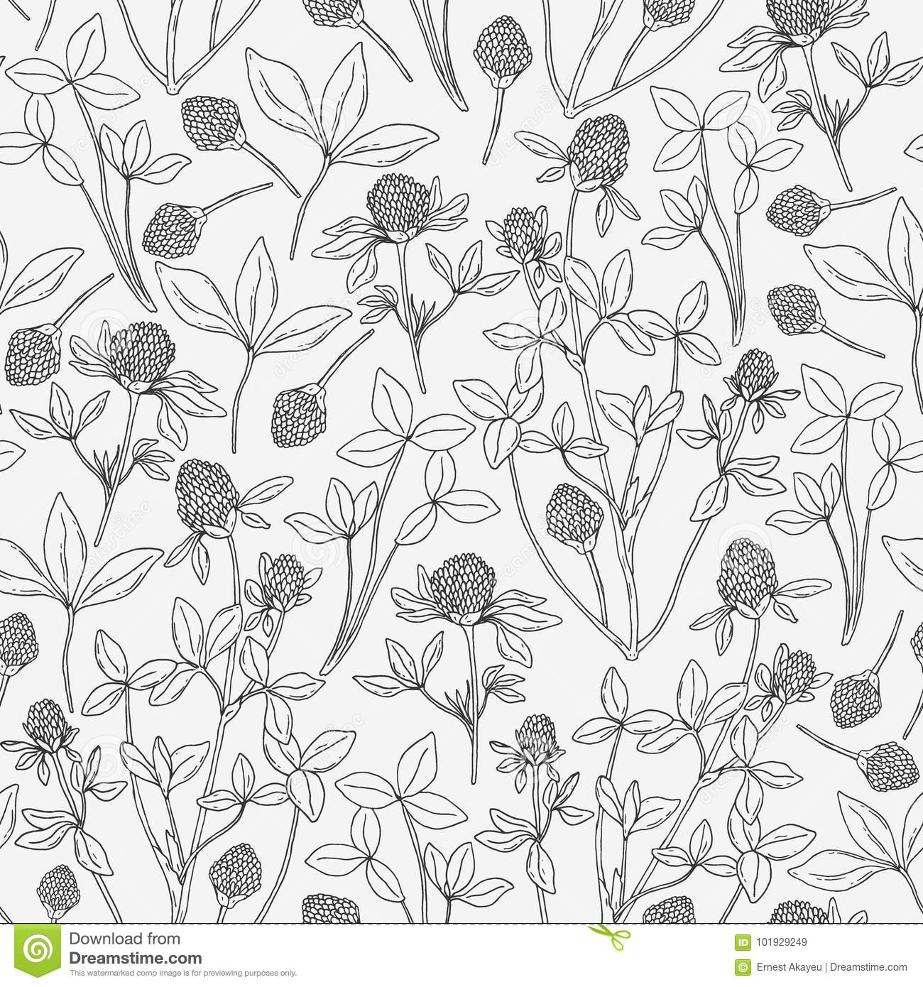 Botanical Seamless Pattern With Clover On White Background