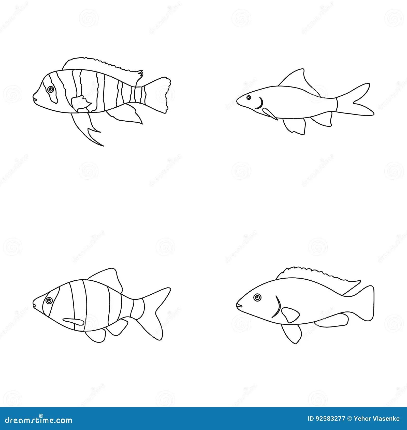 Piranha Cartoons Illustrations Amp Vector Stock Images