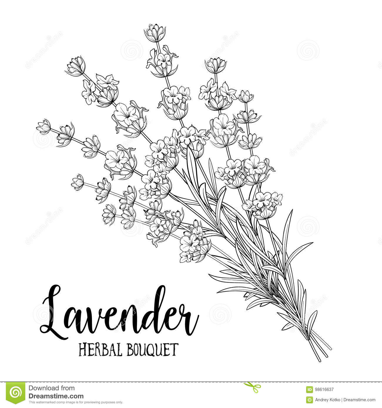 Bouquet Of Lavender Flowers Stock Vector