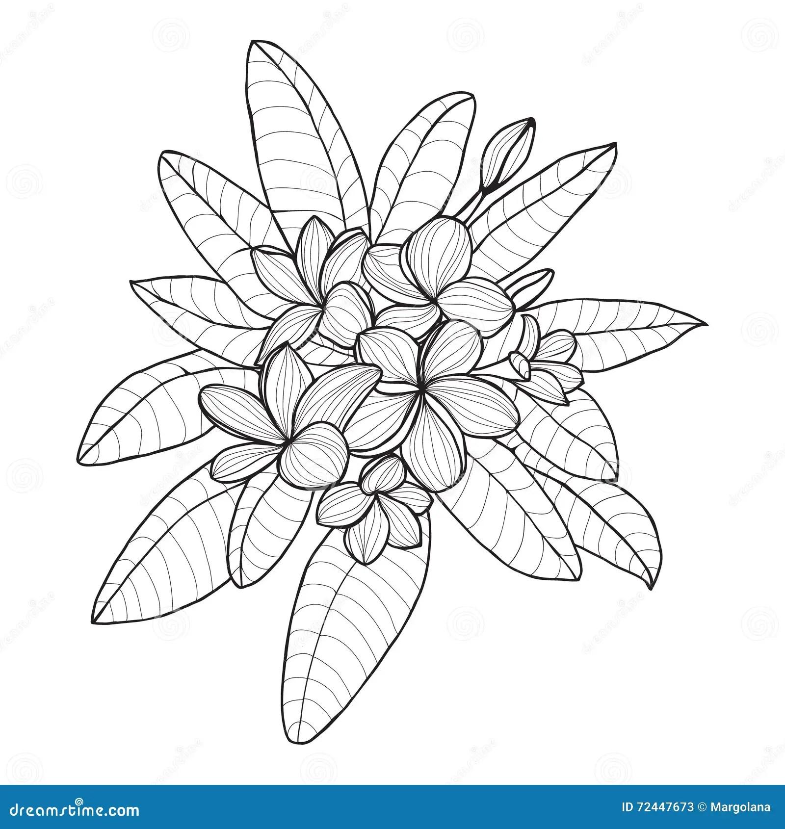 Bouquet With Plumeria Or Frangipani Flower On White