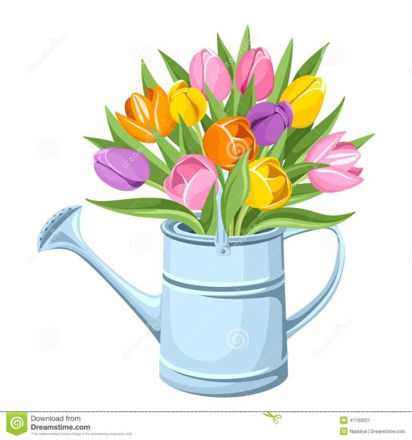 bouquet of tulips in watering