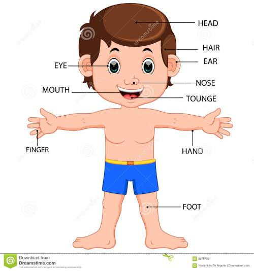 small resolution of illustration of boy body parts diagram poster