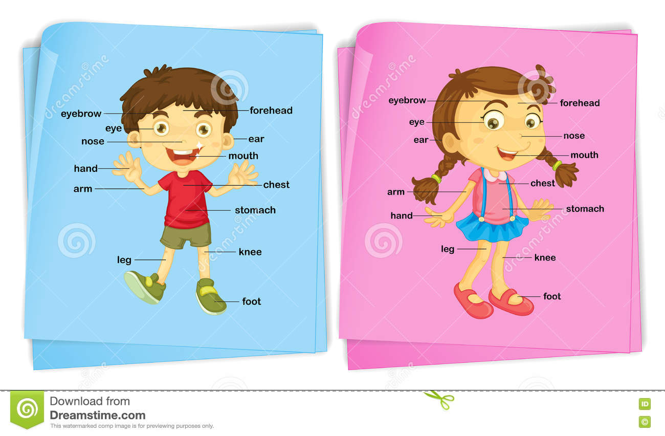 Boy And Girl With Different Body Parts Stock Vector