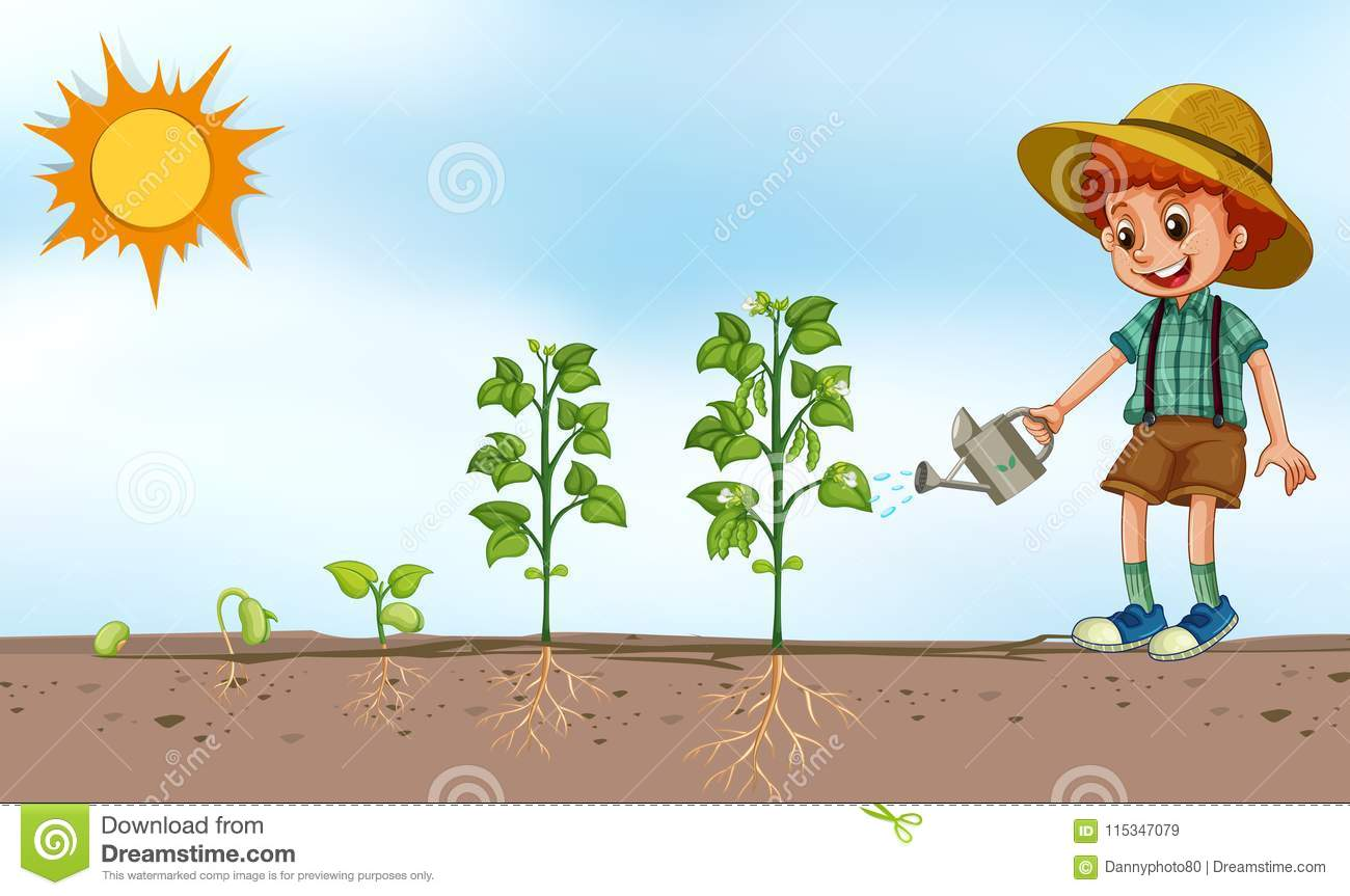 Boy Watering Plant In Garden Stock Vector
