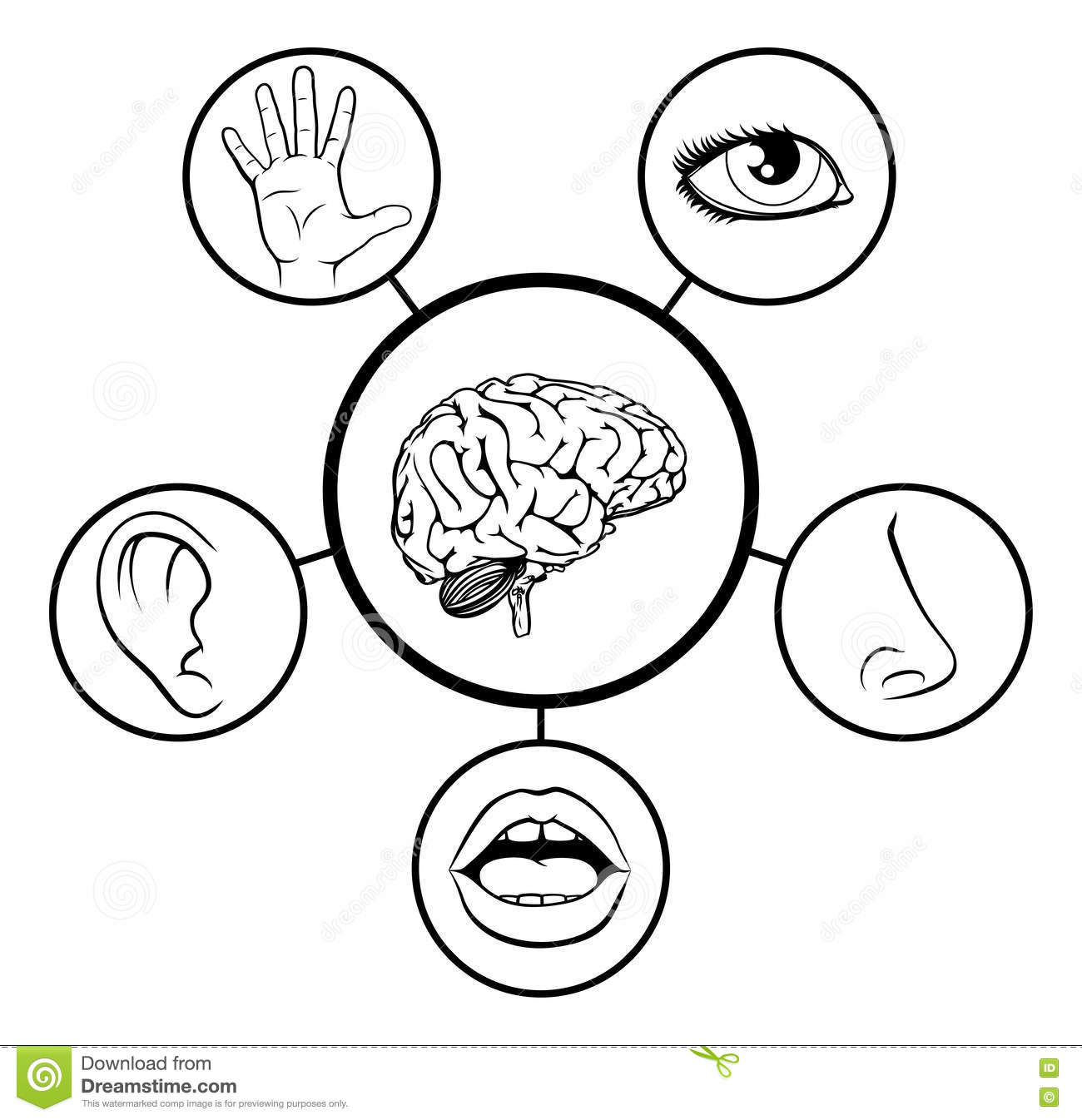 Brain And Five Senses Stock Vector Illustration Of