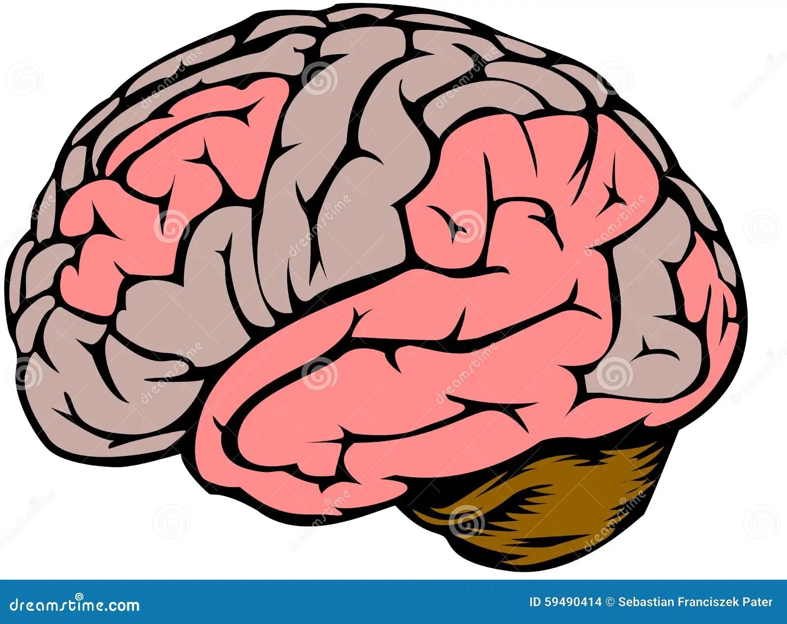 Brain Stock Vector