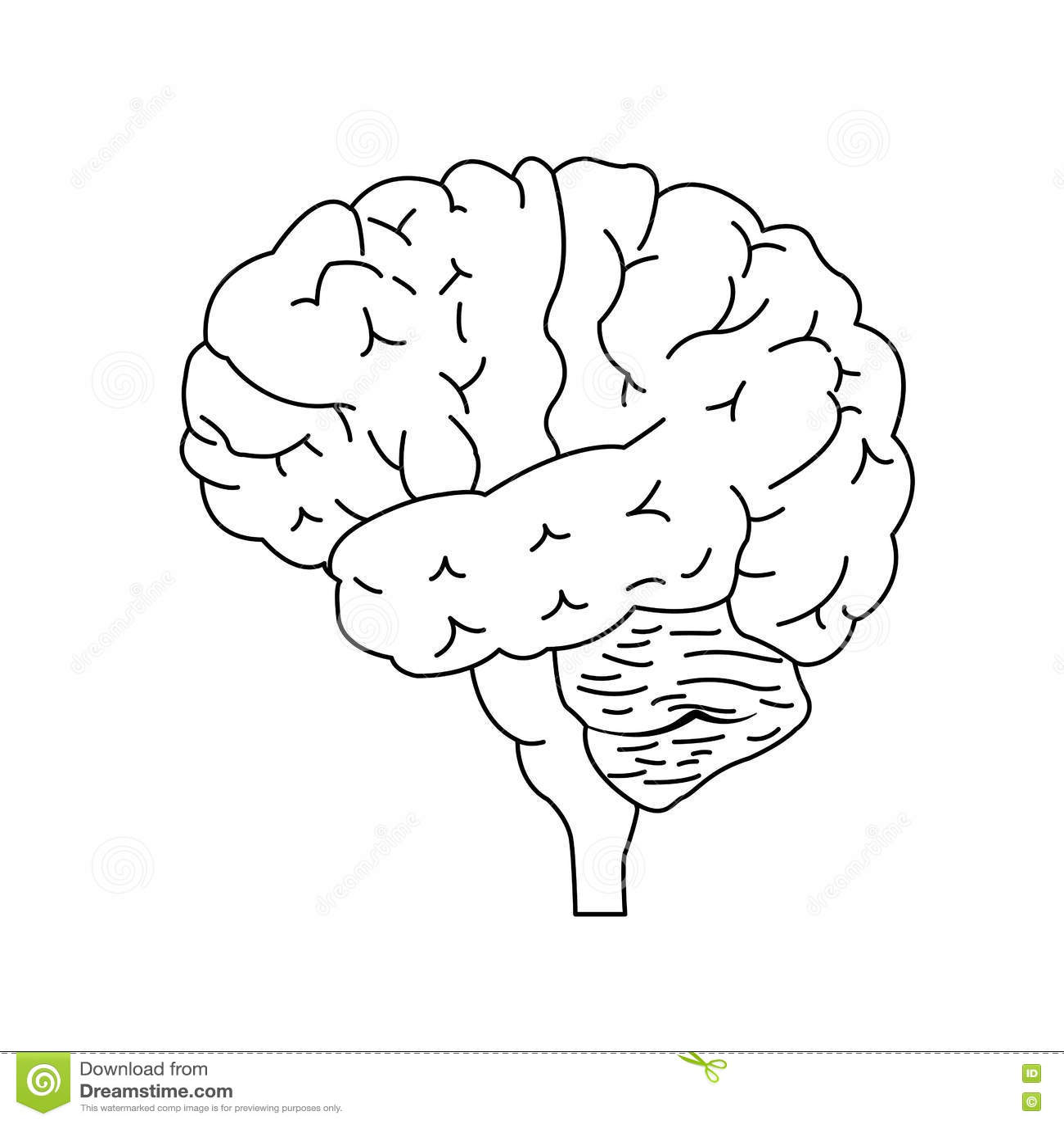 Brain Side View Stock Vector Illustration Of Cerebrum