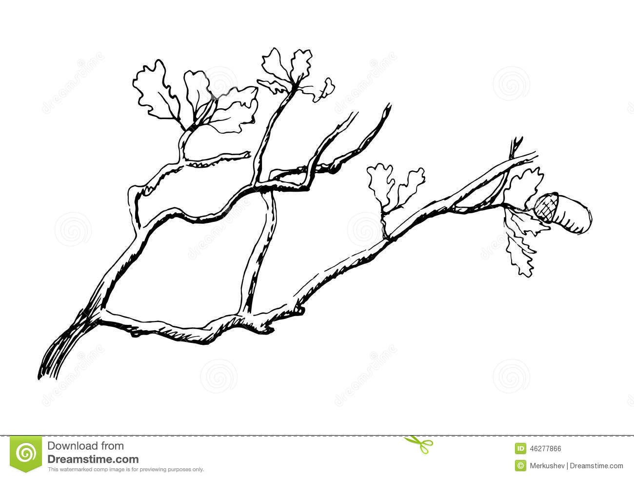 The Branch Of Oak Tree Stock Vector Illustration Of Leaf