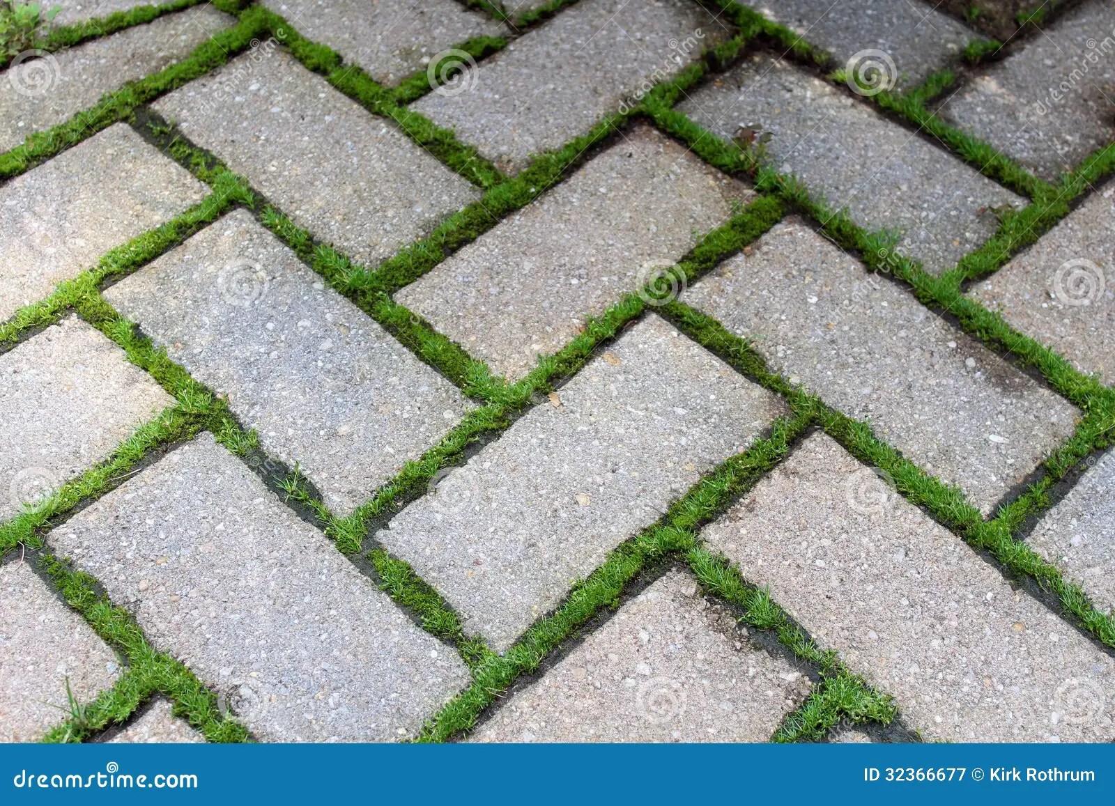 brick pavers with moss